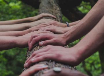 Mains sur un tronc d'arbre